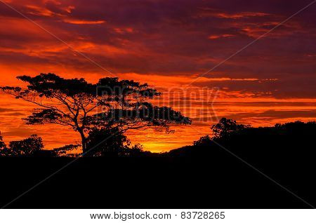Beautiful Sunrise Out In The Country With Silhouetted Of Tree