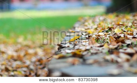 Falling leafs