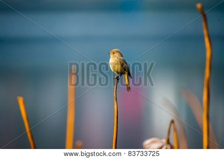A bird sitting on top of yellow reed marshes