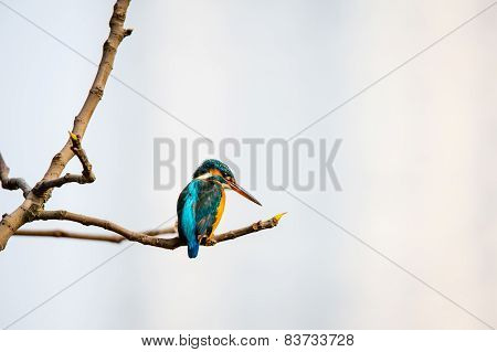 A  colourful bird sitting at the edge of a branch