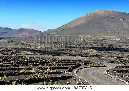 Vineyards At La Geria Valley, Lanzarote Island, Canary Islands, Spain