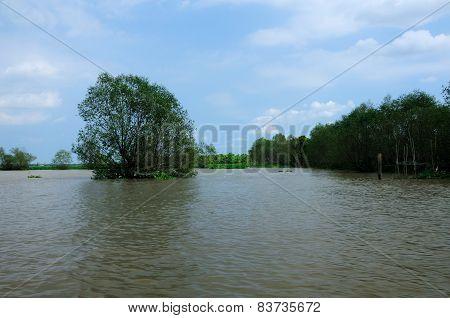 Mangrove Trees in Vietnam