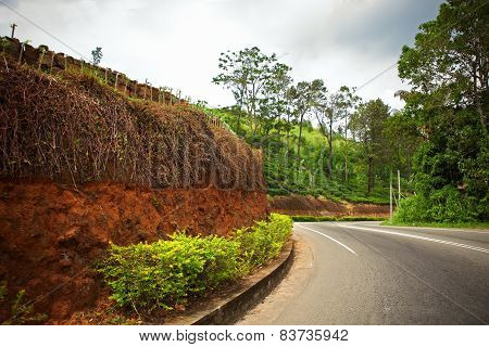 Winding road along the tea plantations