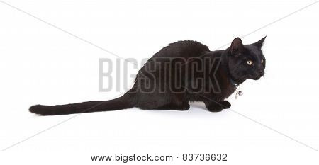 Black Cat Lying Isolated