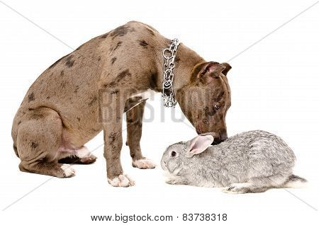 Dog sniffing rabbit