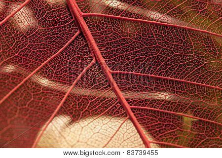 Filigree structures
