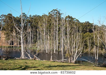 Dead trees in a small lake near Pemberton