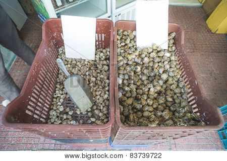 Snails In A Crate On The Market
