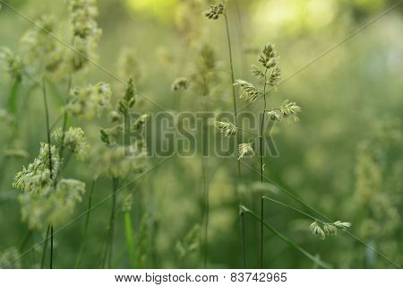 meadow weed grass in summer, rustic style