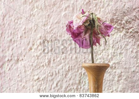Withered Rose Flower
