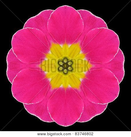 Purple Flower Mandala Kaleidoscope Isolated On Black