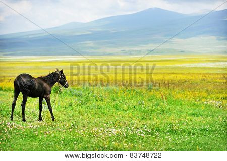 Horse On A Plain In Summer