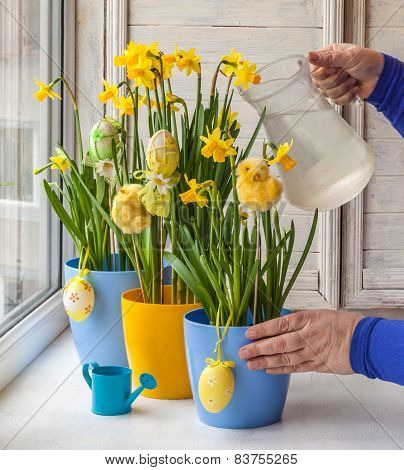 Female Hands Decorated By Easter Pot Of Narcissuses