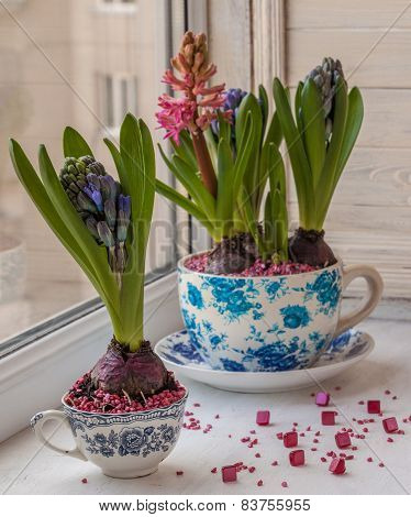 Hyacinths In A Pots With A Vintage Pattern