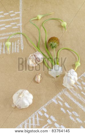 Still life with garlic, buds and flowers on paper drawing with towel