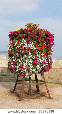 Colourful display of pink white red and yellow petunias on a stand at the seaside on a summer day
