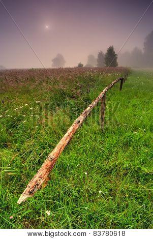 Green Meadow At Dawn