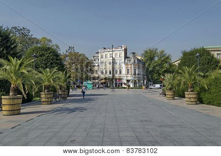 Avenue with palm in Ruse garden