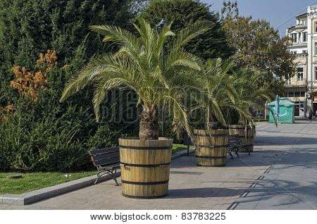 Plant pot with palm in Ruse garden