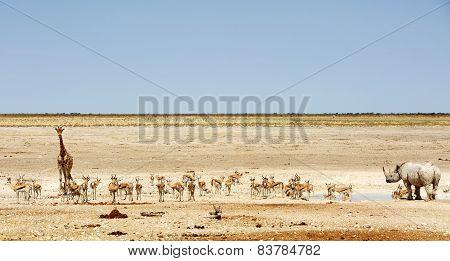 Panorama scene in Etosha