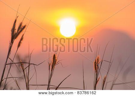 Beautiful Flower With Warm Sunrise