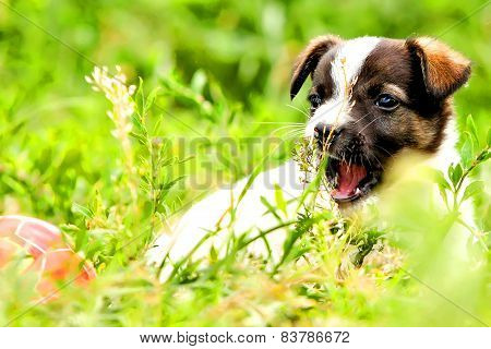 Dog playing in the field with the ball