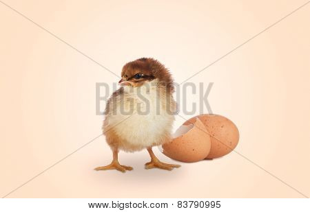 Cute Easter Chick With Shell