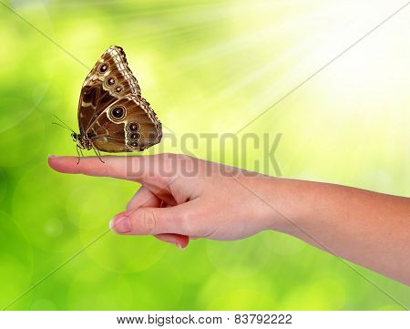Butterfly sitting on the hand