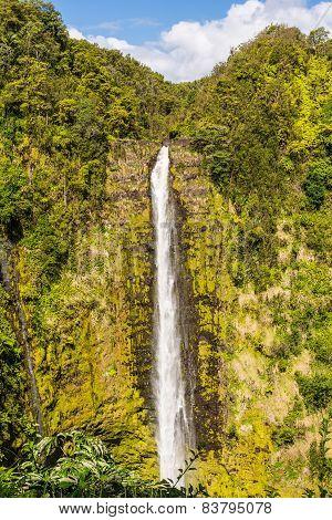 The Akaka Falls, Hawaii