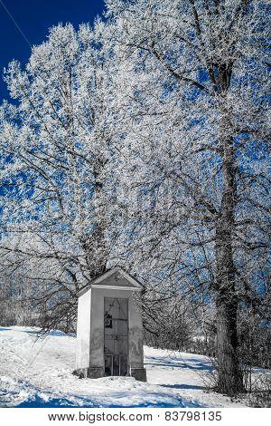 Hoarfrost On Trees