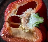 foto of pepper  - Bell pepper also known as sweet pepper or a pepper capsicum - JPG