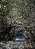 picture of snowy-road  - Winter Road through Snowy Trees Alley in Frosty Day Outdoors - JPG