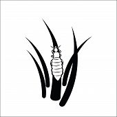 picture of lice  - Vector illustration  - JPG