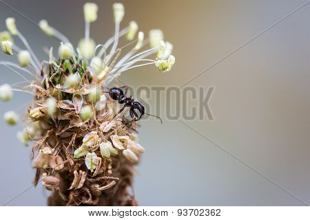 Hungry ant feeding on its prey on top of plant
