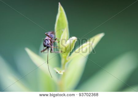 Little black bug hanging on a green bud