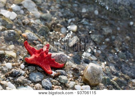 Red Sea star, stone beach, clean water background
