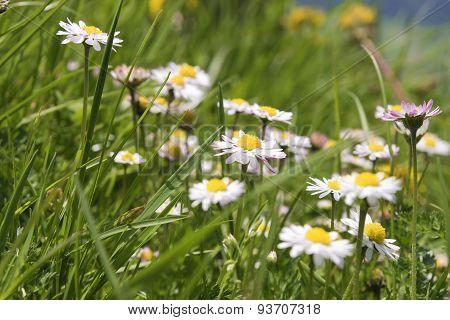 Daisy Breitenstein Bavaria Alps