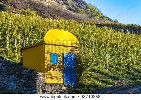 vineyard in Sion region, canton Valais, Switzerland