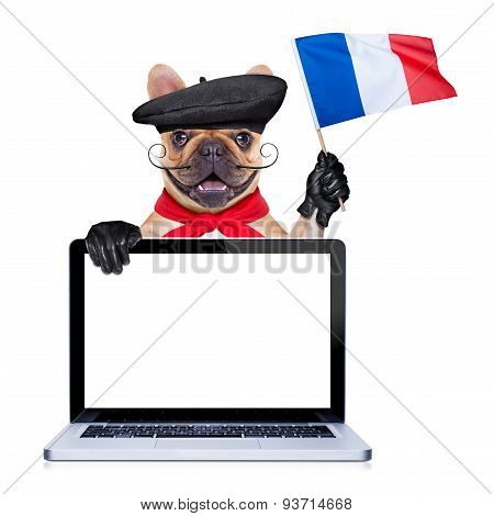 French Proud   Dog