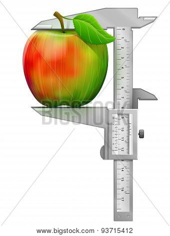 Vertical Caliper Measures Apple Fruit