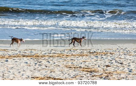 Dogs On Beach With Leashes