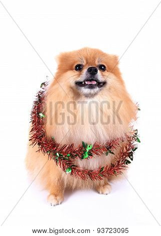 Pomeranian Dog Dressed New Year Tinsel Decoration