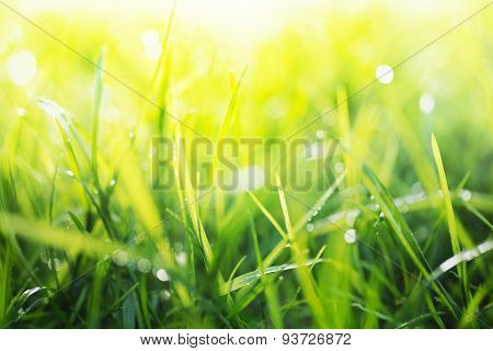 Green Background, Detail Of Grass