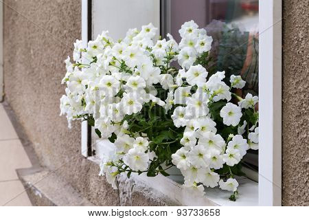 Authentic White Flowers In The Open Window In The Wall Of The House Run. Selective Focus And Space I