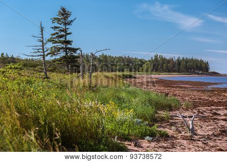 The shoreline on the south shore of Prince Edward Island, Canada.