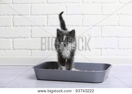 Small gray kitten in plastic litter cat on floor