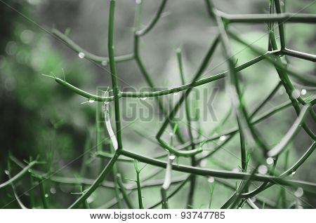 Water drops on green grass. Morning nature background