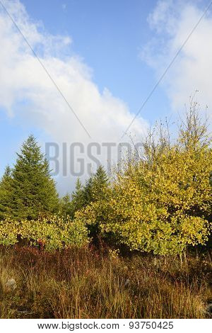 Mountain Meadow in Autumn