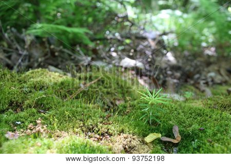 A Small Tree in Moss