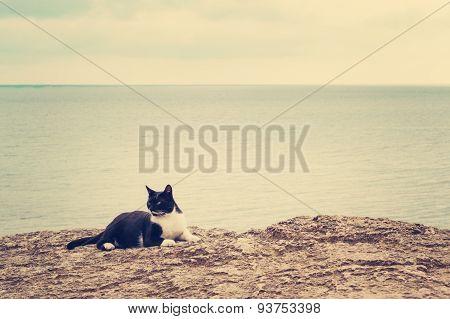 The  Cat On The Beach.